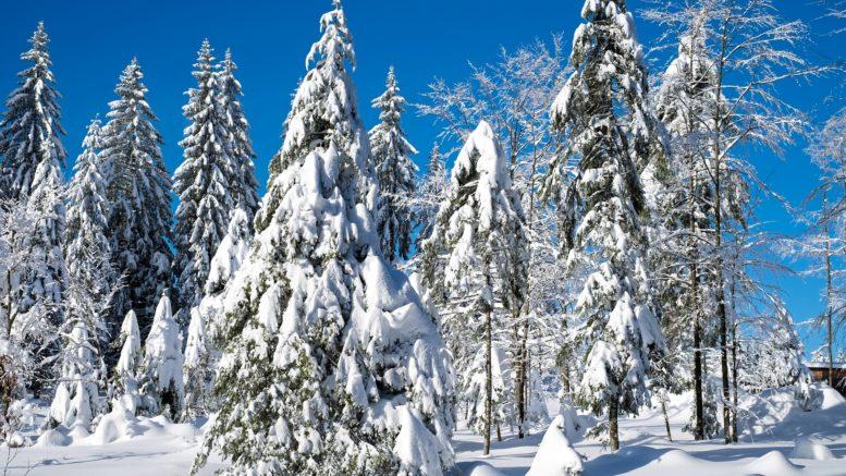 Tipps um gesünder durch die Winterzeit zu kommen